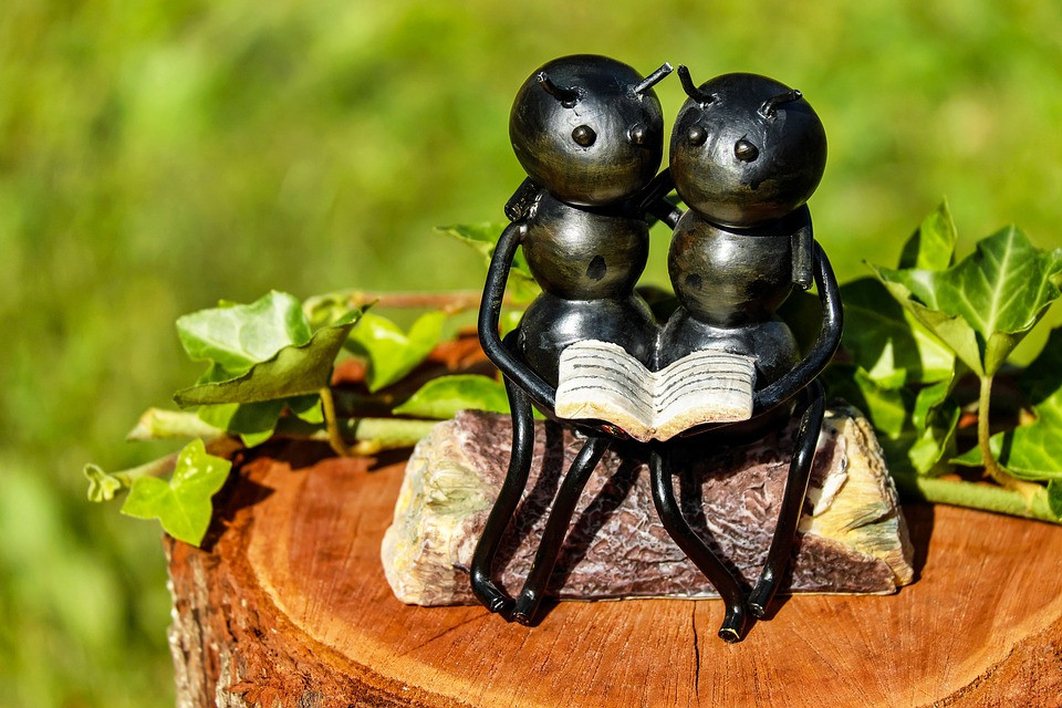 mravenci, PixaBay