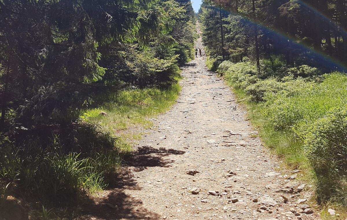 Cesta na Špičák